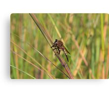 Bearded Robber Fly - Little Miami White Water Canvas Print