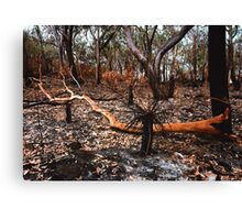 After the fire. Canvas Print