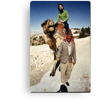 Camel in Jordan. Canvas Print