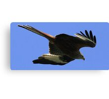The Red Kite Canvas Print