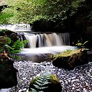 The Glen,Kilsyth, Scotland by Jim Wilson