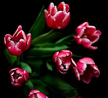 Cerise Tulips on Black by Wendy Kennedy