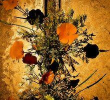 Harvest Poppy by Cupertino