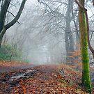 Misty Morning by Jim Wilson