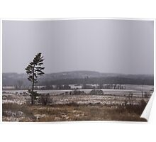Canadian North - Lone Pine, Fields, Hills and Fresh Snow Poster