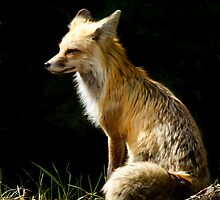 Red Fox Vixen   #4226 by JL Woody Wooden