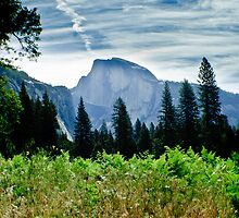 Half Dome by Phillip M. Burrow