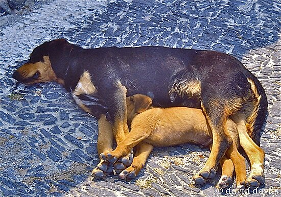 Let Sleeping Dogs Lie, Santorini, Greece by David Davies