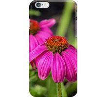 Echinacea II iPhone Case/Skin