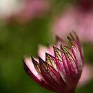 Flora by Sophie Matthews