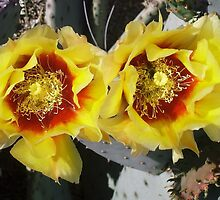 Bee Bonnet Prickly Pear Blossoms by whatshapplin