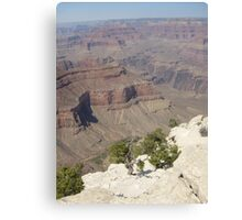 Grand Canyon / Twisted Tree Canvas Print