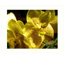 Shadowed Yellow Orchids Art Print