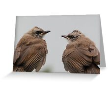 Handsome Twin Babies Greeting Card