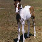 Painted Colt by WTBird