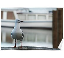 The Gull Poster