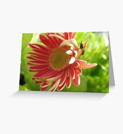 Flippant Gerbera Greeting Card