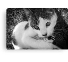 Kandid Kitty Canvas Print