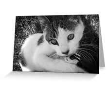 Kandid Kitty Greeting Card