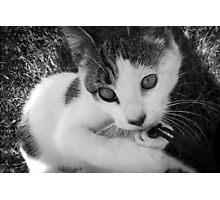 Kandid Kitty Photographic Print