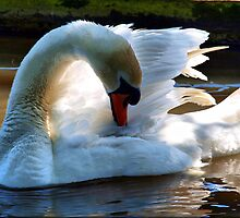 The Beauty Within by Clive