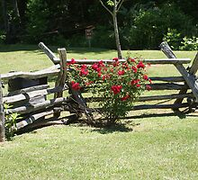 Along A Split Rail Fence by Roger Jewell