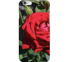 Red Rose, original photography, garden flower iPhone Case/Skin