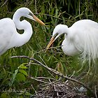 Common Egret by WiredMarys