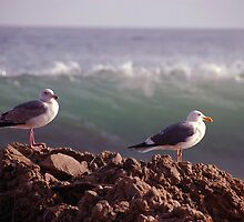 Two Birds One Wave by tom j deters