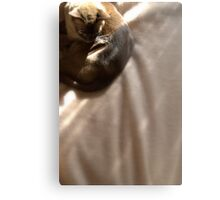 the brown blanket © 2010 patricia vannucci Metal Print