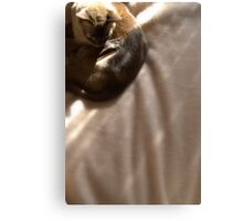 the brown blanket © 2010 patricia vannucci Canvas Print