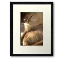 whiskers  © 2010 patricia vannucci  Framed Print