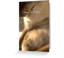 whiskers  © 2010 patricia vannucci  Greeting Card