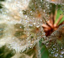 Favourite Weed I - Victoria, BC by Tejana Howes