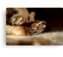 paws & claws © 2010 patricia vannucci  Canvas Print