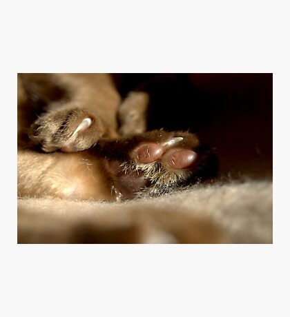 paws & claws © 2010 patricia vannucci  Photographic Print