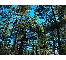 Susan Creek Indian Mounds  Photographic Print