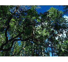 Susan Creek indian mounds skyline 2 Photographic Print