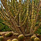 Cactus by Katy Breen