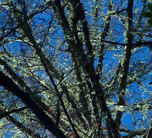 Susan Creek Indian Mounds Tree by goddessteri211