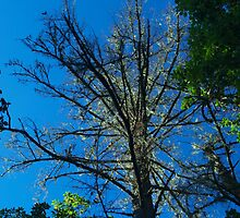 The glowing tree by goddessteri211