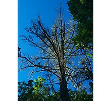 The glowing tree Photographic Print