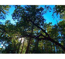 Susan Creek Indian Mounds Skyline 3 Photographic Print