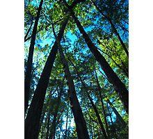 Susan Creek Indian Mound Tee Pee Photographic Print