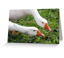 What's with that camera? - geese at Warrina Lakes Greeting Card