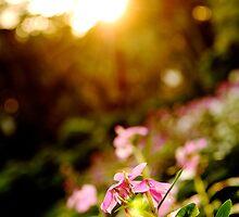 Sunbathing - Botanical Gardens, Ho Chi Minh City, Vietnam by MadsMonsen