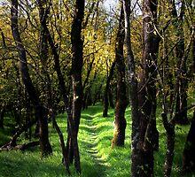 Through the Bundaleer Forest by pablosvista2