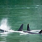 Orca Pod by Tracy Riddell