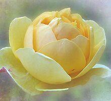 ~ Mellow Yellow ~ by Brenda Boisvert