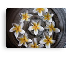 Circle of Frangipanis Canvas Print